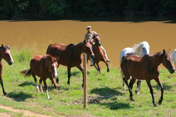 cavalos5