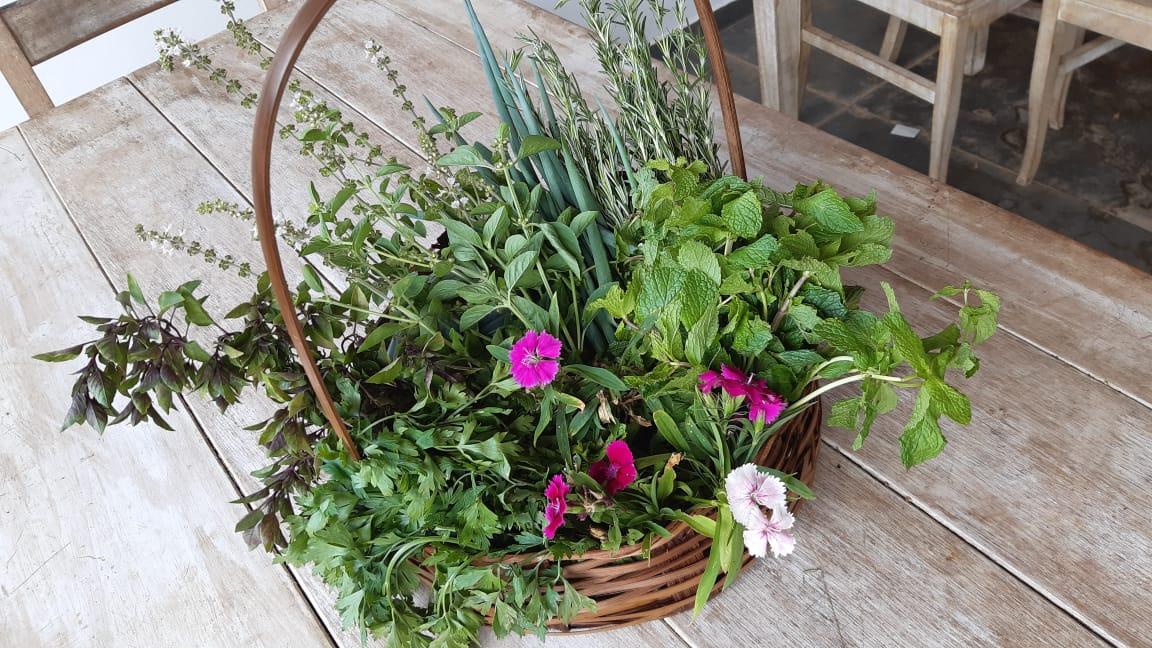 Como fazer uma horta na Fazenda Capoava